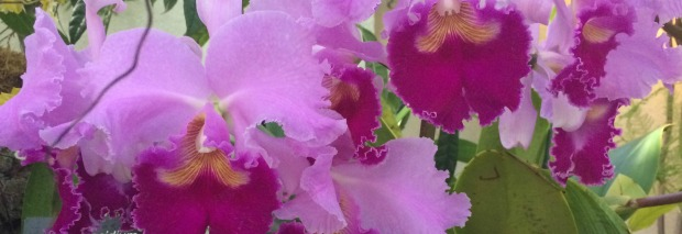 Orchides - lilac - edited - medium size